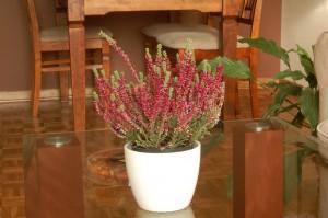 pokój dzienny - rośliny w stylizacji