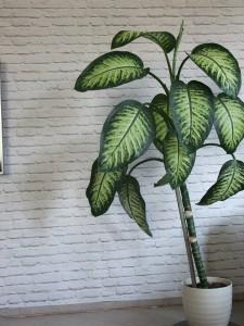 rośliny - ocieplenie klimatu