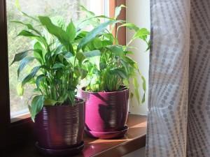 rośliny we wnętrzu